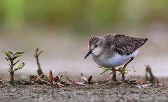 Was für den Ornithologen und die, die es gerade werden