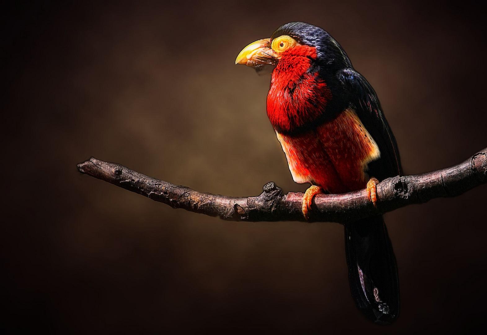 Was für ein bunter Vogel
