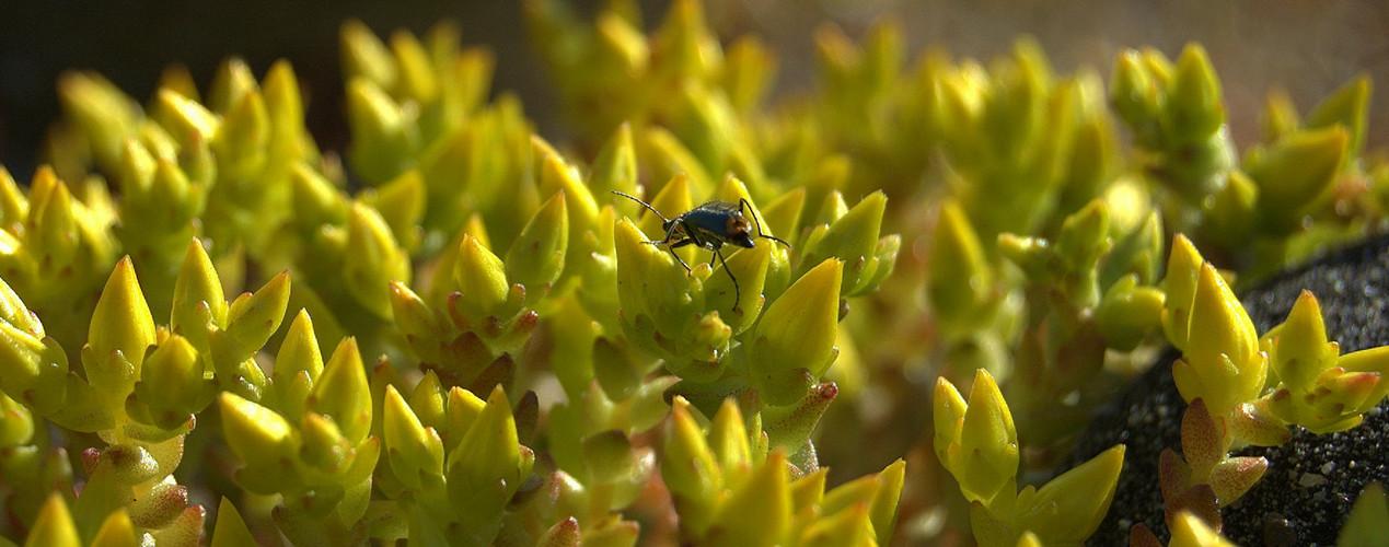 Was für ein Insekt krabbelt denn da?