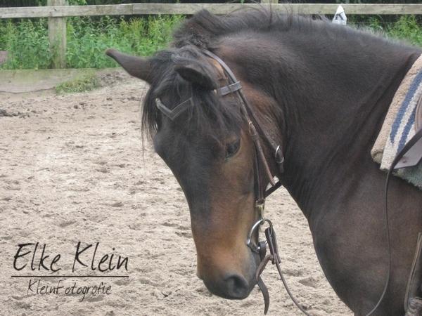 Was für ein Pony