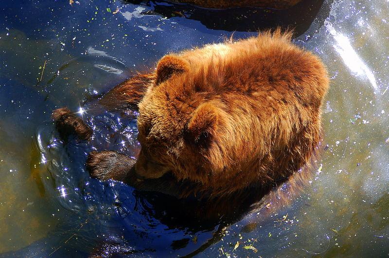 Was für eine Bärenhitze , heute