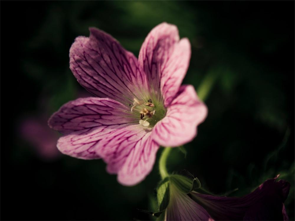 Was für eine Blüte...