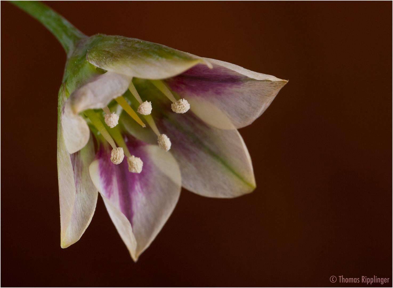 Was für eine Blüte ist das......