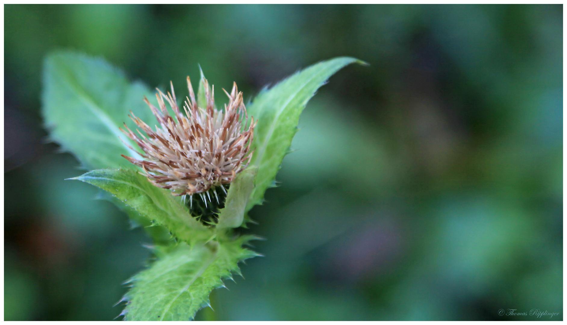 was f r eine pflanze ist das foto bild pflanzen pilze flechten bl ten kleinpflanzen