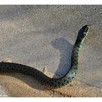 Was für eine Schlange ist das denn?