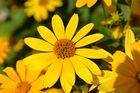 was für eine schöne Sommerblume