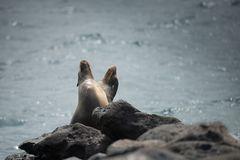 Pinguine - Robben