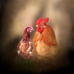 was guckst du ? Du bist nur ein Huhn, leg  dein Ei.
