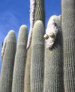 was-guckst-du-Kaktus