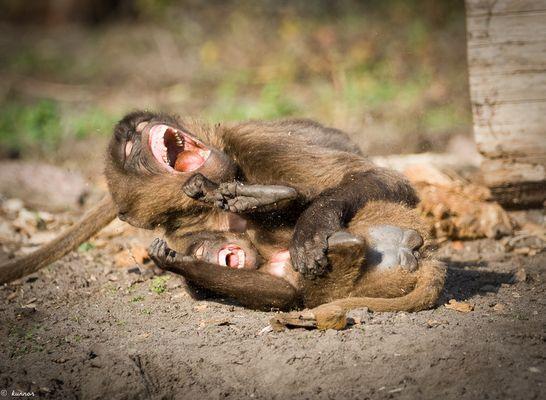 Lustige Affen Fotos & Bilder auf fotocommunity
