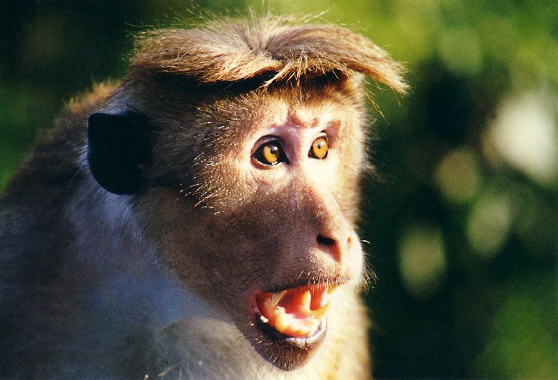 ....was heißt hier blöder Affe?
