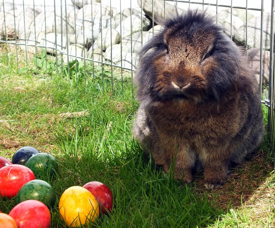 WAS?? ICH soll an Ostern schuld sein???