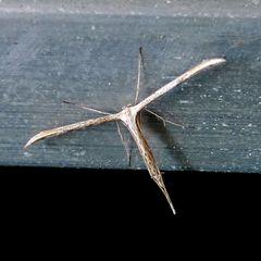 Was ist das für ein seltsames Tier? --- EDIT: Geklärt.