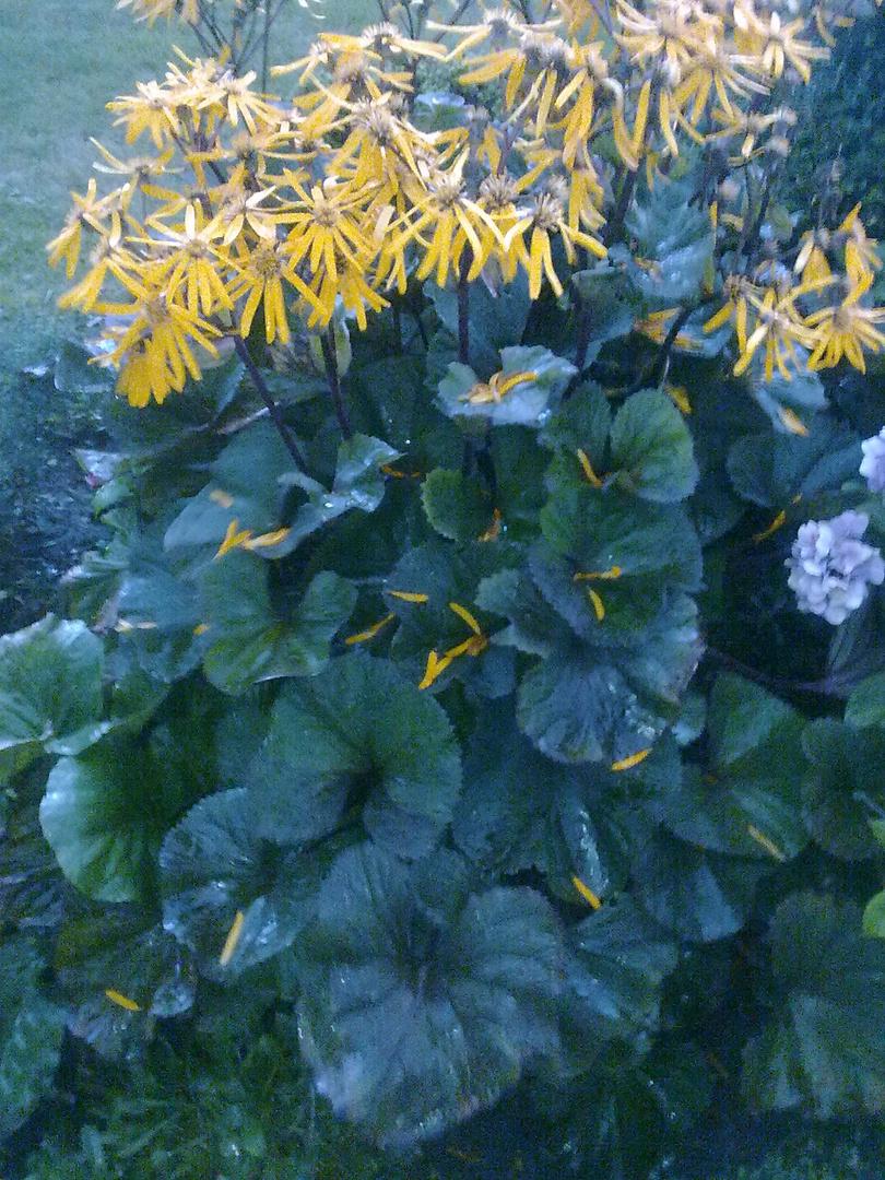 was ist das f r eine pflanze foto bild pflanzen pilze flechten bl ten kleinpflanzen