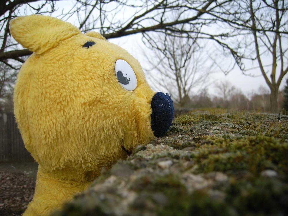 Was ist das? - Natürlich der gelbe Bär