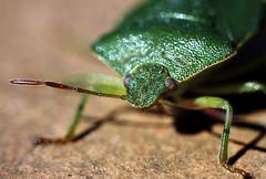 Was ist klein, grün und stinkt?
