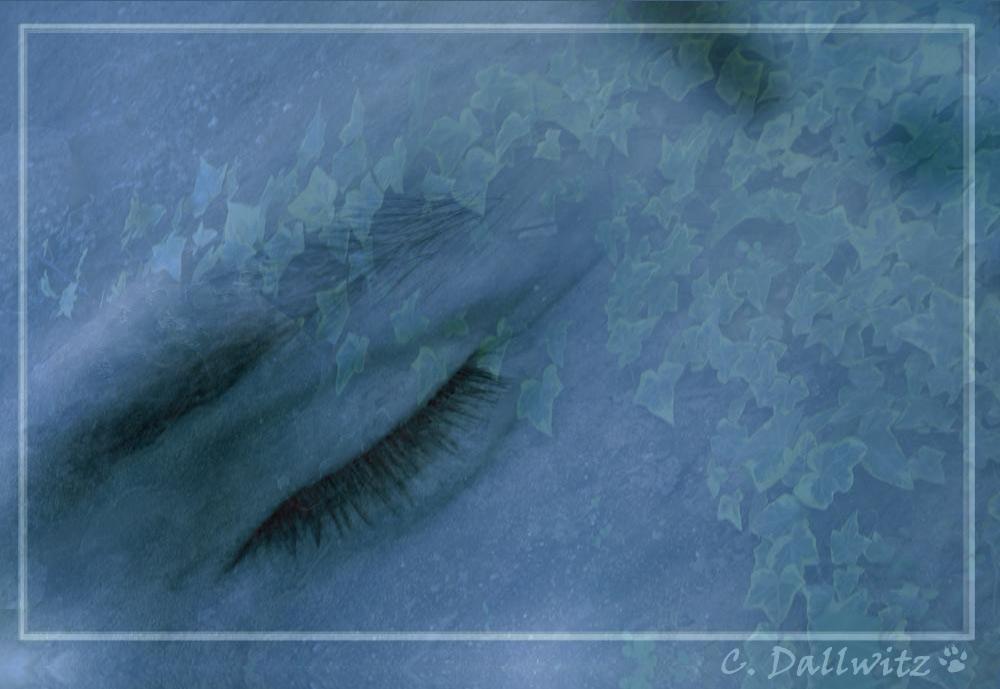 Was ist schöner als ein Traum?