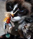 Was Katzen so sehen