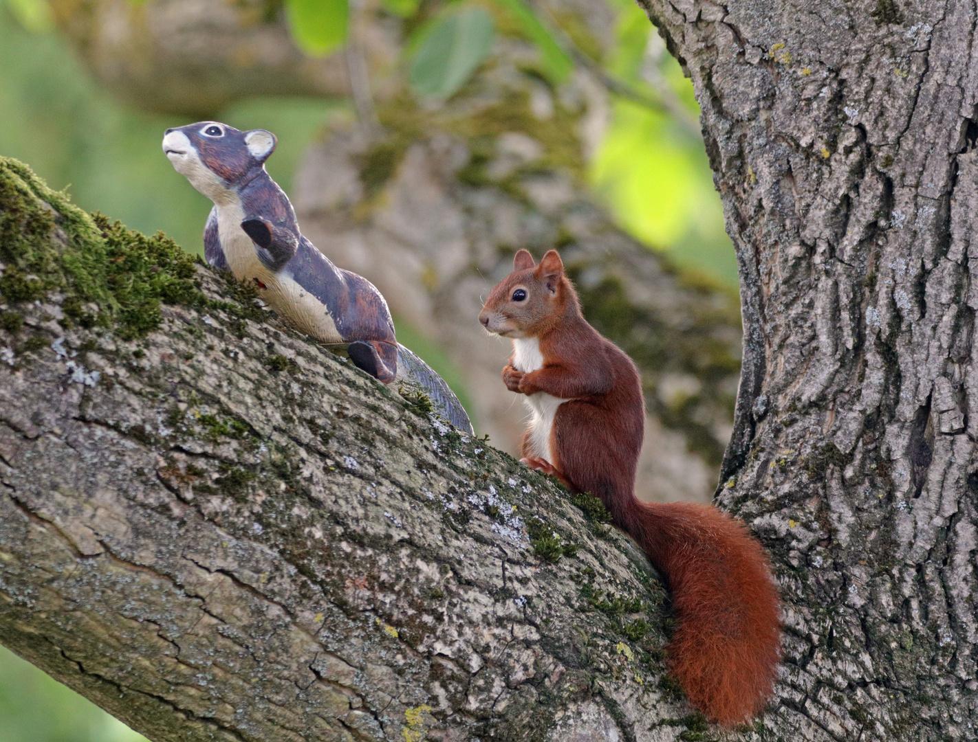 Was machst Du in meinem Nussbaum?