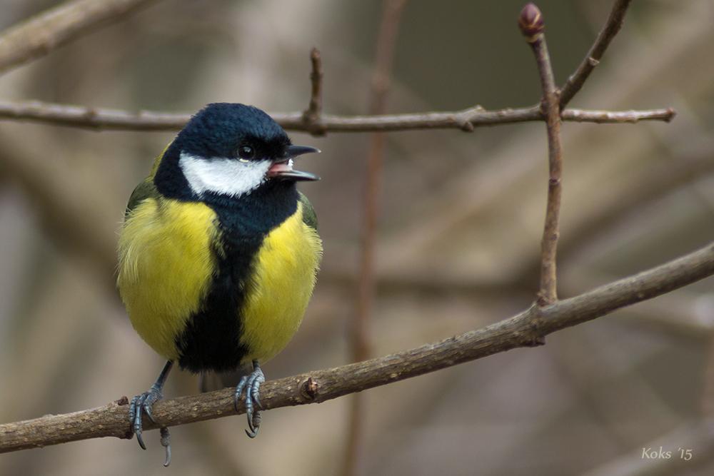 Was macht ein Singvogel ?