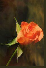 Was man so sagt durch die Blumen….