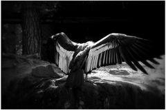 Was nützen einem die größten Flügel
