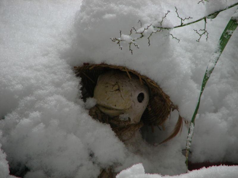 Was nun,schon Winter?