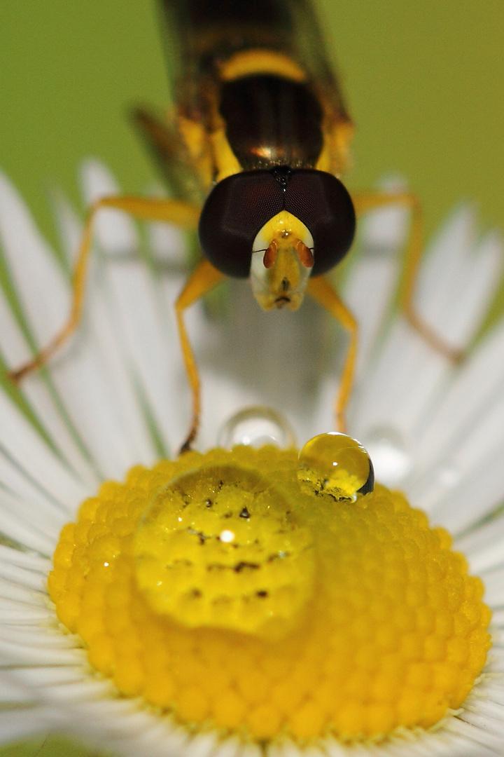 Was, schon wieder Pollensuppe?