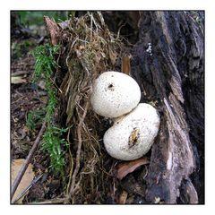 Was sind das für Pilze?