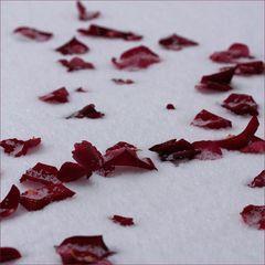 Was sind Rosen ohne dich?