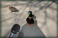 """""""......was soll ich noch weiter sagen. Meine Frau, die Ente, versteht mich nicht mehr!"""""""