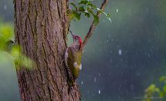 Was tun bei intensivem Regen ? (2.)