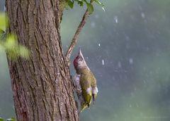 Was tun bei intensivem Regen ?