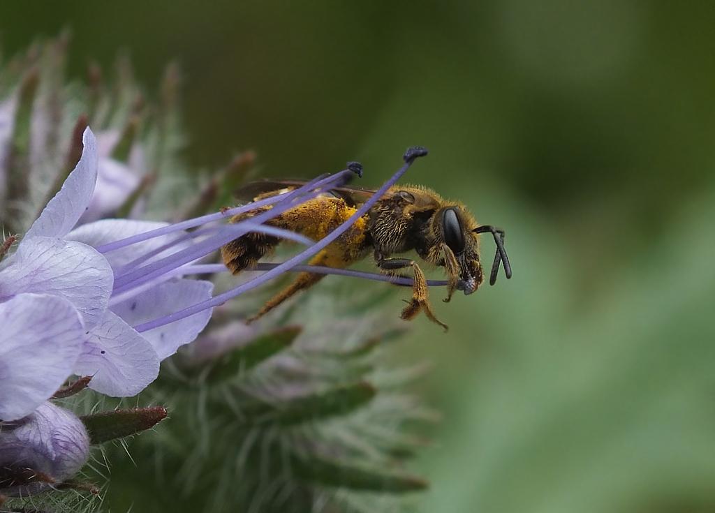 Was tut man nicht alles für die leckersten Pollen
