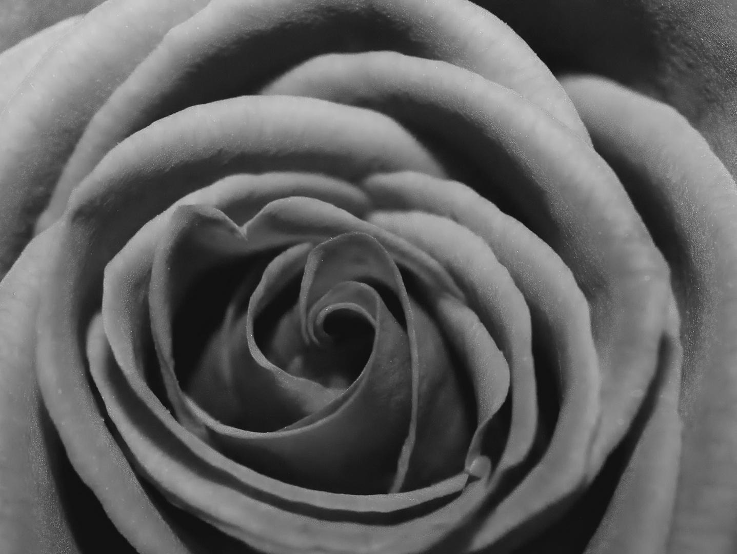 Was uns Rose heißt, wie es auch hieße, würde lieblich duften