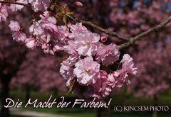 Was wären wir ohne die Farben des Frühlings...