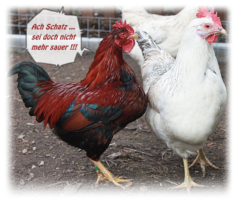 Gemeinsame Was zum schmunzeln ;o)... Foto & Bild   tiere, haustiere &FU_16