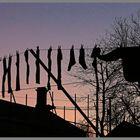washing line 2 newtown near lilburn evening