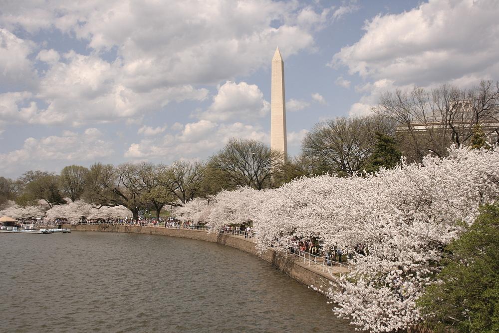 Washington Kirschblüte