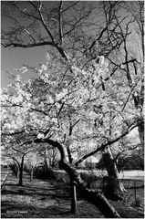 Washington Springtime - No.1