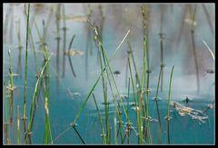 Wasser & Gras I