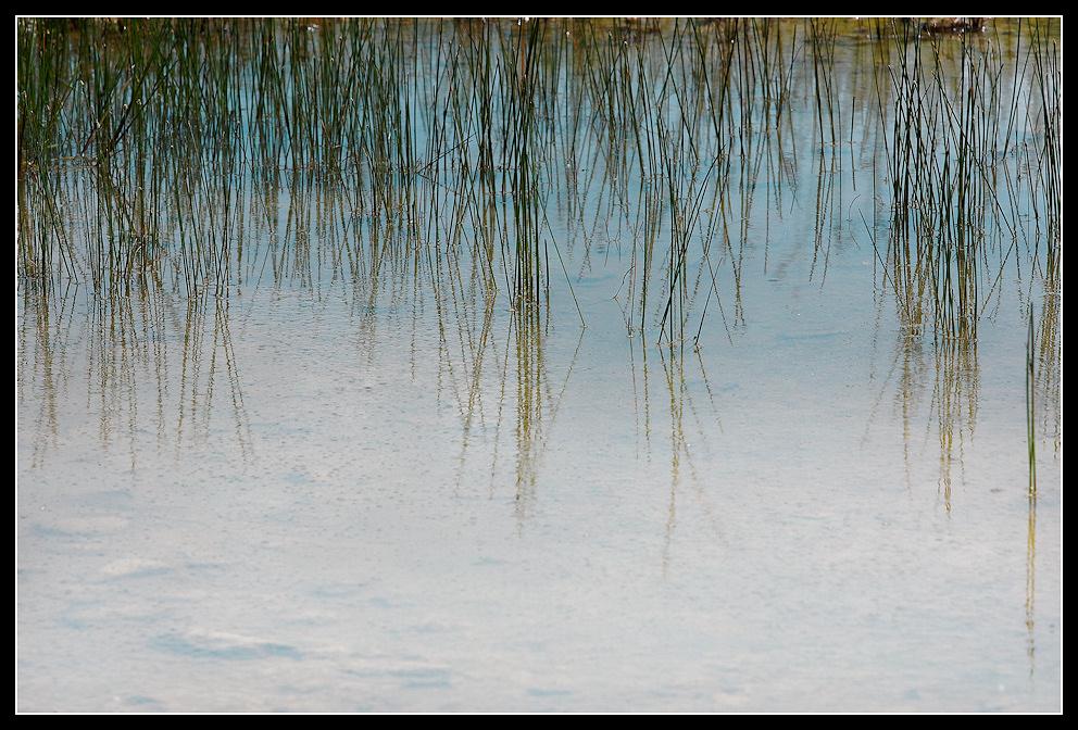 Wasser & Gras III