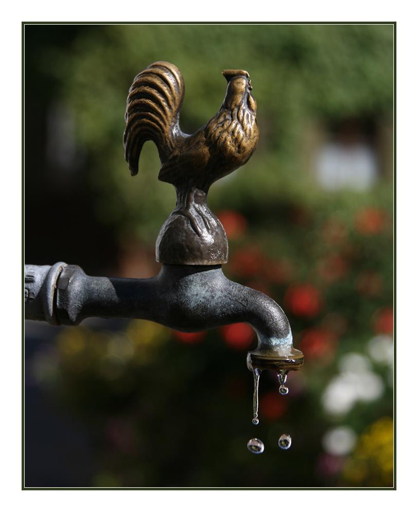 Wasser-Hahn