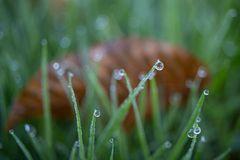 Wasser im Gras-2280
