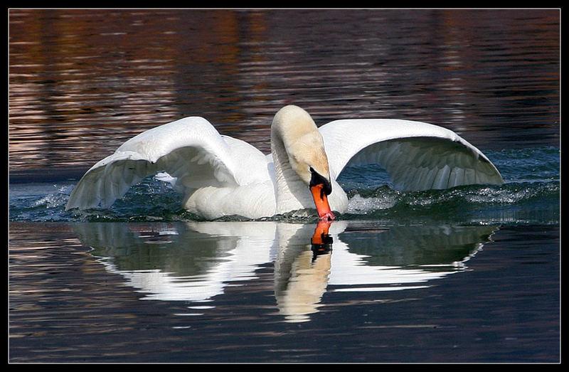 Wasser Kuss