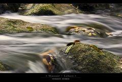 Wasser-Leben