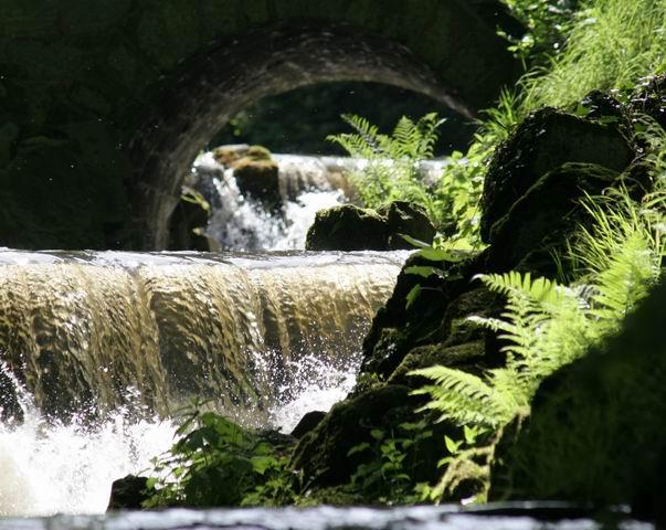 Wasser, Licht und frisches Grün.