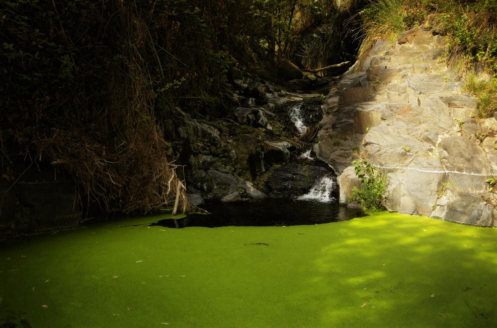 Wasser mit Grün, El Guro, La Gomera