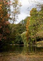 Wasser, Schwäne, Herbst
