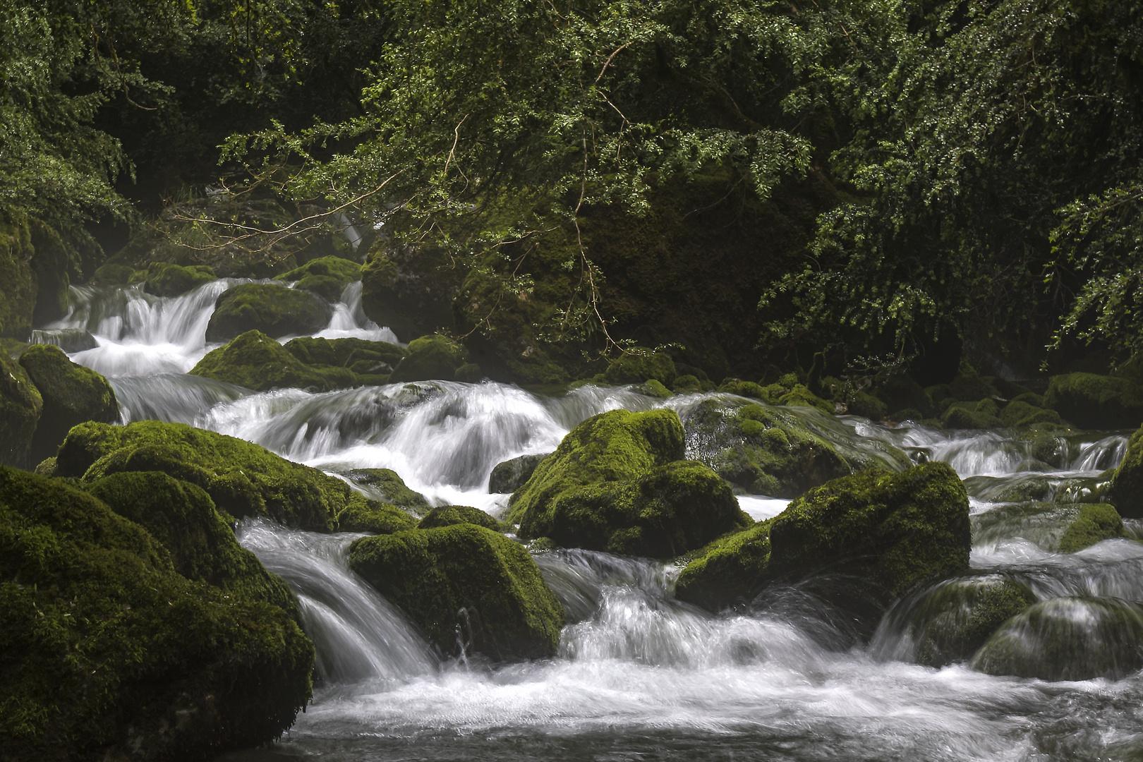 Wasser Steine Und Moos Foto Bild France World Wald Bilder